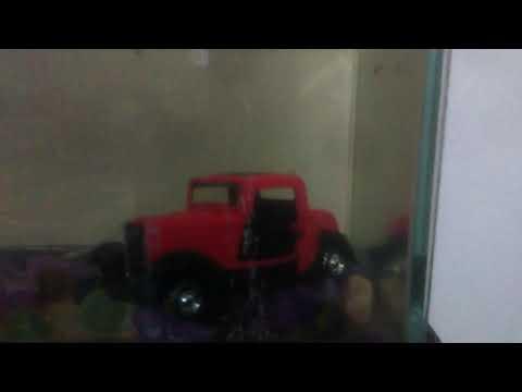 Yavru lepistes akvaryumunda oyuncak araba