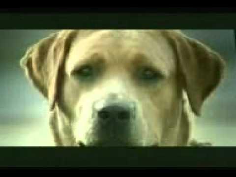 shisha ho ya dil. Dog . 3gp