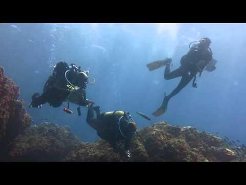 une plongée aux îles Habibas, au large d'Oran