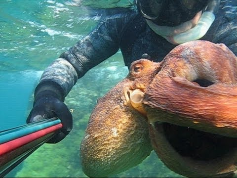 Pescasub Pesci e polpi