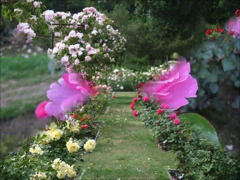 Xxx Mp4 LYNN ANDERSON Rose Garden J B Video 3gp Sex