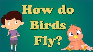 How do Birds Fly for Children