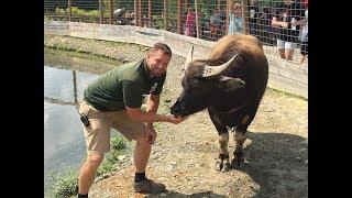 Animal Adventures with Jordan: Water Buffalo