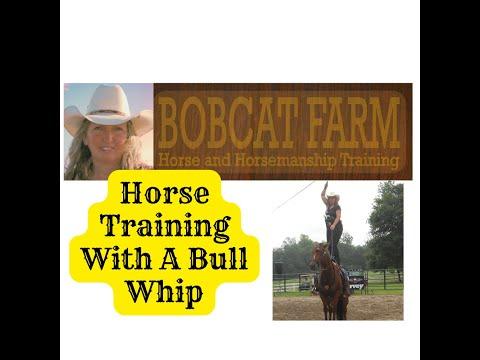 Xxx Mp4 Horse Training With Bull Whip 3gp Sex