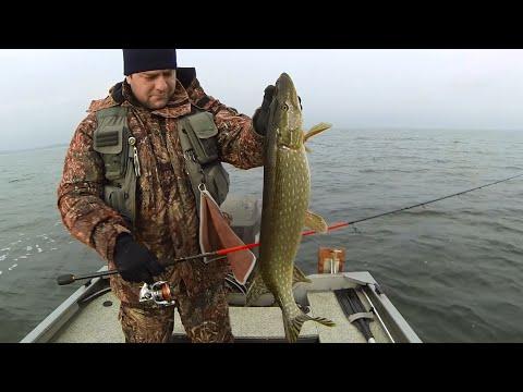 видео рыбак поймал щуку