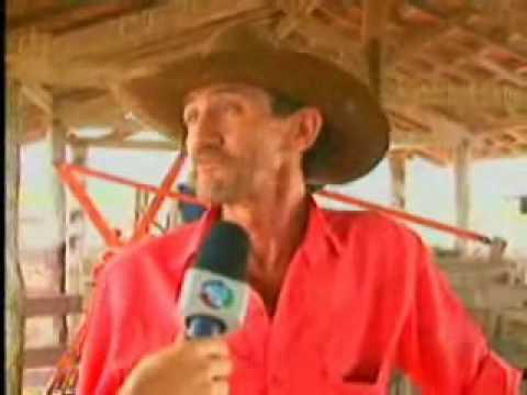 Record Rural Pesquisa aponta vantagens e desvantagens do transporte do gado em comitivas
