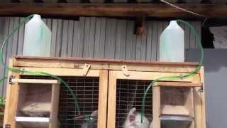 Поилки для кроликов с подогревом своими руками