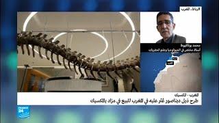 ذيل ديناصور عثر عليه في المغرب سيباع في مزاد بالمكسيك