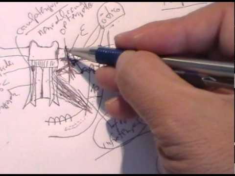 ANATOMIA 2.0: CRANEO: FOSAS EXTRACRANEALES