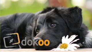 Quarks & Co Mensch und Hund  eine irre Beziehung | Doku