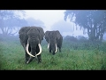 Download Video Amazing Animals Hidden In The Jungle - Thailand Forest Documentary - World Documentary 3GP MP4 FLV