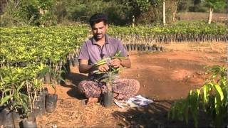 Grafting techniques Kannada BAIF Karnataka