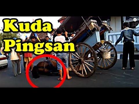 KUDA PINGSAN | Fainted Horse