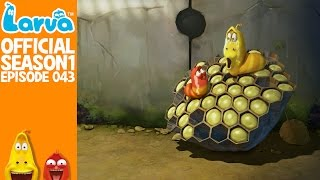 [Official] Bee 1 - Larva Season 1 Episode 43