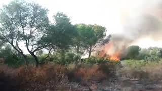 Incendio Bosco Santo Pietro