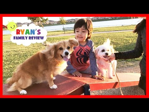 Xxx Mp4 Kids Fun Playtime At Playground And Dog Park With Ryan S Family Review 3gp Sex