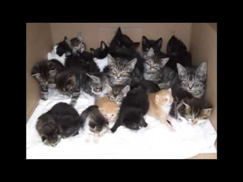 Cuidados postoperatorios felinas (castrar ó esterilizar)