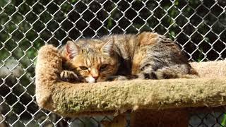 Feral cats love life in California sanctuary