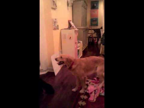 Big dog small girl