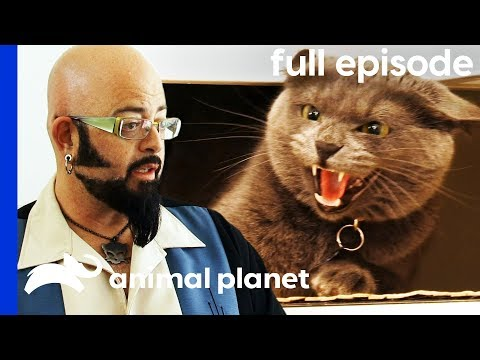 Aggressive Cat Is Stopping Owners From Getting Married My Cat From Hell Full Episode