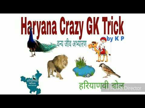 Xxx Mp4 वन्यजीव अभयारण्य Haryana Crazy GK Trick भुल के दिखाओ Haryana Vanyajeev Abhyaran 3gp Sex