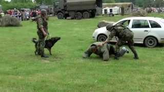 Ukázka výcviku služebních psů, Centrum vojenské kynologie Chotyně, Lešany, 2014