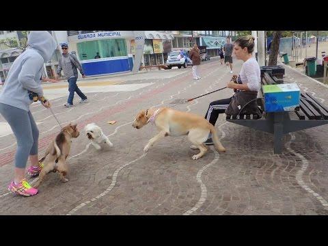Cão agressivo sem guia ataca outros cães em SC.
