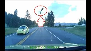 Deer Gets Hit By FAST Car And Goes Flying 50 Feet In The Air