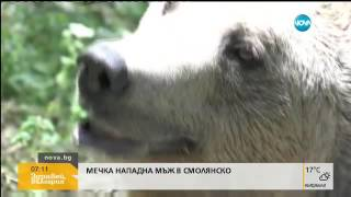 Мъж се би с мечка - Здравей, България (17.06.2016г.)
