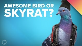 Why Does Everyone Hate Pigeons?