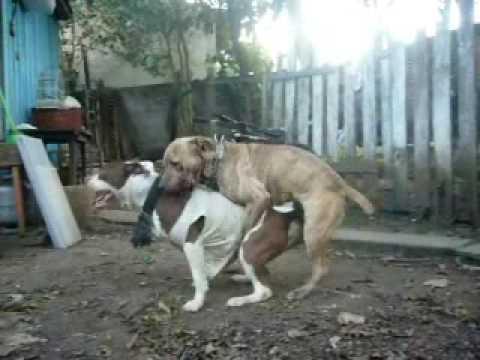 Dog's Sexy Orgy - אורגיית כלבים