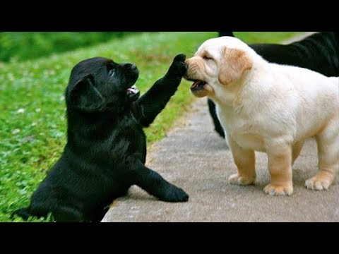 Cute is Not Enough - Funny Cats and Dogs Compilation #211