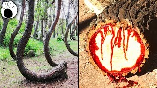 Top 10 Forests That Are WAY STRANGER Than They Look