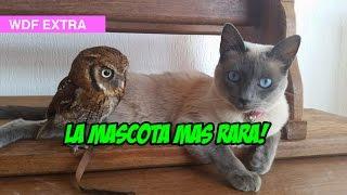 La Mascota mas Rara !
