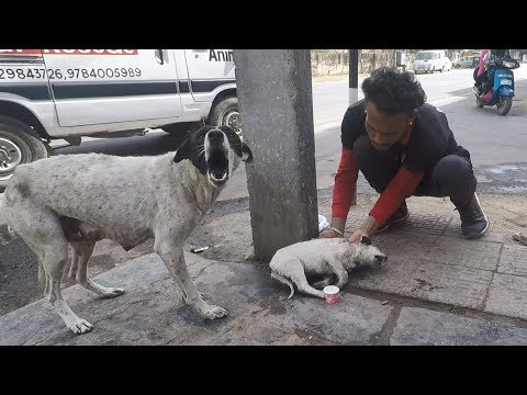 Xxx Mp4 Anguished Mother Dog Wails For Wounded Baby Sweetest Reunion 3gp Sex