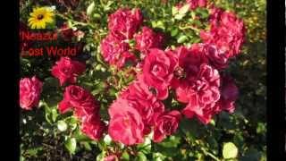 Bohudesh Bohu Poth Ghure-Farida Parvin