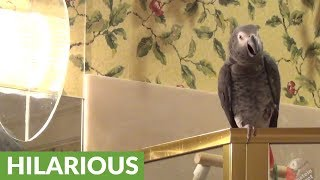 Consoling parrot doesn't want you to be afraid