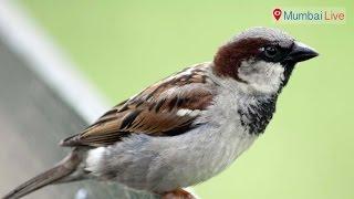 Bird houses for sparrow | Mumbai Live