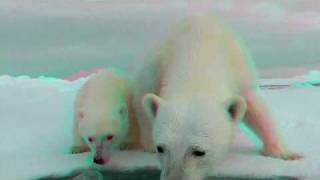 3D Cute Animals - Polar Bears (Ursus maritimus) - Mum & Baby Polar Bear In 3D Anaglyph