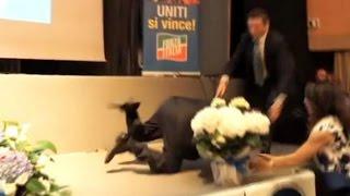 Berlusconi cade dal palco a Genova durante un comizio a sostegno del candidato Toti - OverPress