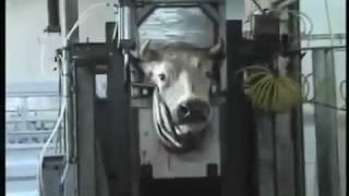 SHOCKING IMAGES: Dark Side of Eating Meat (2009 Belgium, Europe)