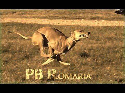 PB Romaria
