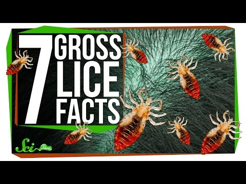 7 Things You Probably Don t Want to Know About Lice