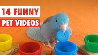 14 Funny Pets | Awesome Pet Video Compilation 2017