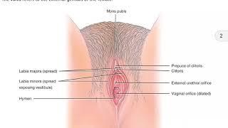 Female External Genitalia in Hindi
