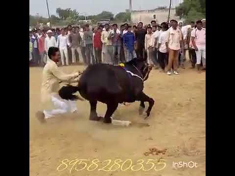 Xxx Mp4 Horse Dance 2018 3gp Sex