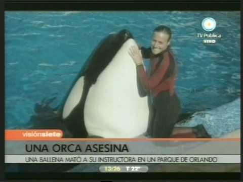 ORCA ASESINA GRITO SILENCIOSO DE LIBERTAD