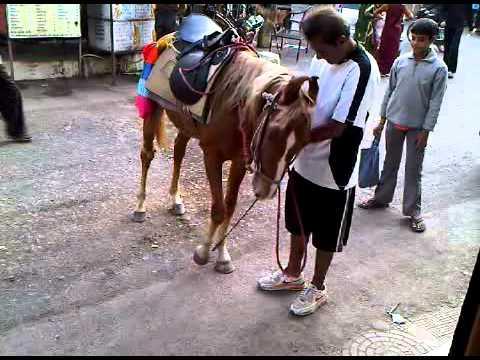 Xxx Mp4 Horse Trick Kathor Shabber Dhalech Bhai Jaan Kathor H 3GP 3gp Sex
