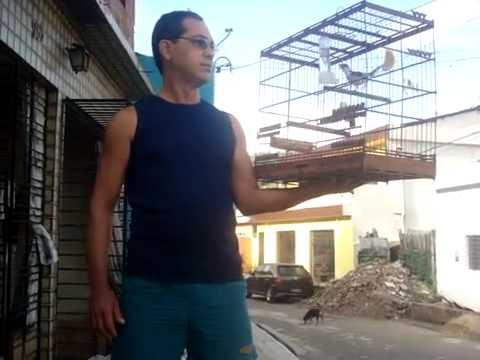 Galo de Campina Cantador de Jaboatão