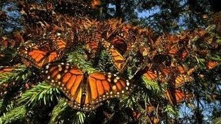Nat Geo Wild 2015 Life Of Butterfly Animal Planet